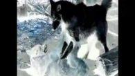 Permalink to Gugun Blues Shelter – White Dog